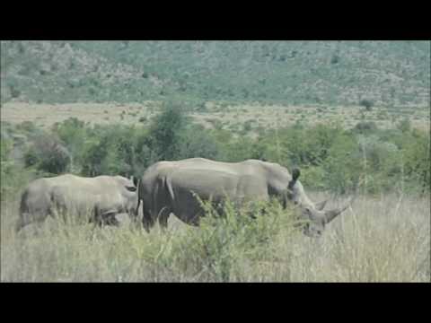 Afrique du Sud, Part 1