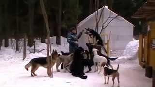 Выгул и социализация собак в группе