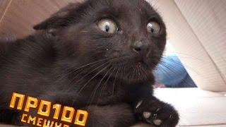 Приколы про кошек!  Кошки и пылесосы  Самое смешное видео