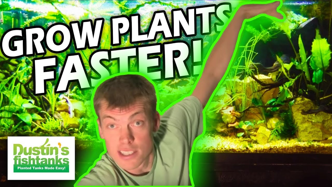How to grow aquarium plants fast the aerial advantage for Growing plants with fish