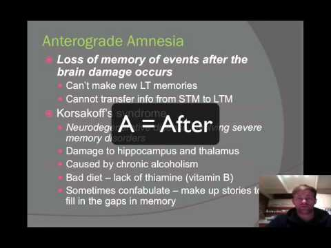 Memory Part 6 Hippocampus and Alzheimers