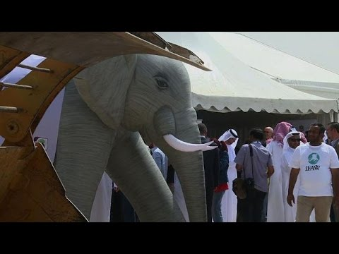 UAE govt destroys confiscated ivory from illegal trade