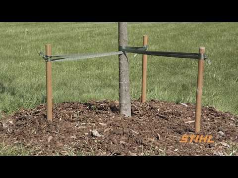 Tree Care Tips: Tree Selection