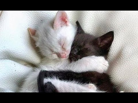 Cats and Kittens Galore. Enjoy Funny Cute Cats and Kittens Meowing Playing Videos #84
