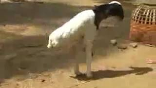 vuclip animal comedy funny video 2018