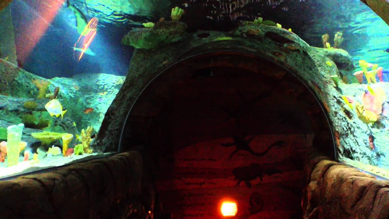 Sealife Aquarium Kansas City May 2012 Youtube