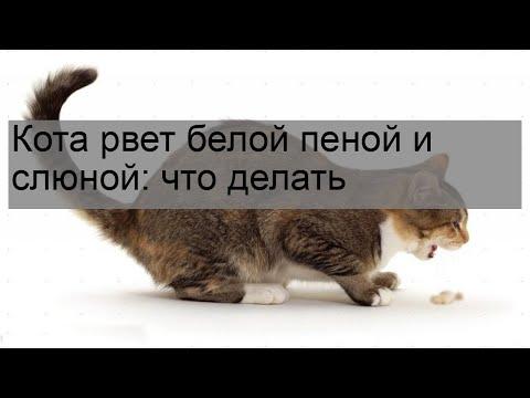 Вопрос: Почему кота рвет, и как ему помочь?