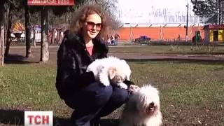 Одесская идеальная собака
