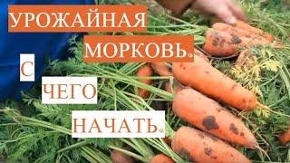 Отличная Всхожесть Семян! Как Подготовить Семена Моркови к Посадке.