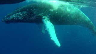 Most Epic Maui Whale Watch EVER - part 1