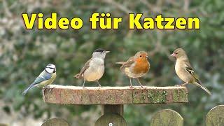 Videos Für Katzen Zum Spielen : Schöne Vögel Im Garten