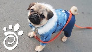 Зимний Уход За Шерстью Собак. Все О Домашних Животных
