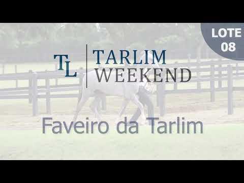 Lote 08 - Faveiro da Tarlim (Potros Tarlim)