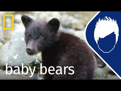 Baby Bears: Even Cuter in Slow Motion? (Episode 7)   wild_life with bertie gregory