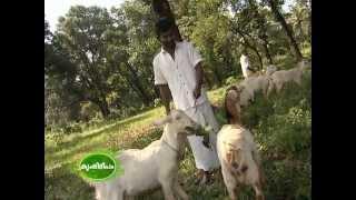 Farming activities at Viyyoor Central Jail, Kerala