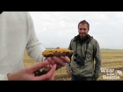 Vlog: Duizenden kraanvogels