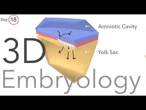 Gastrulation - Embryology