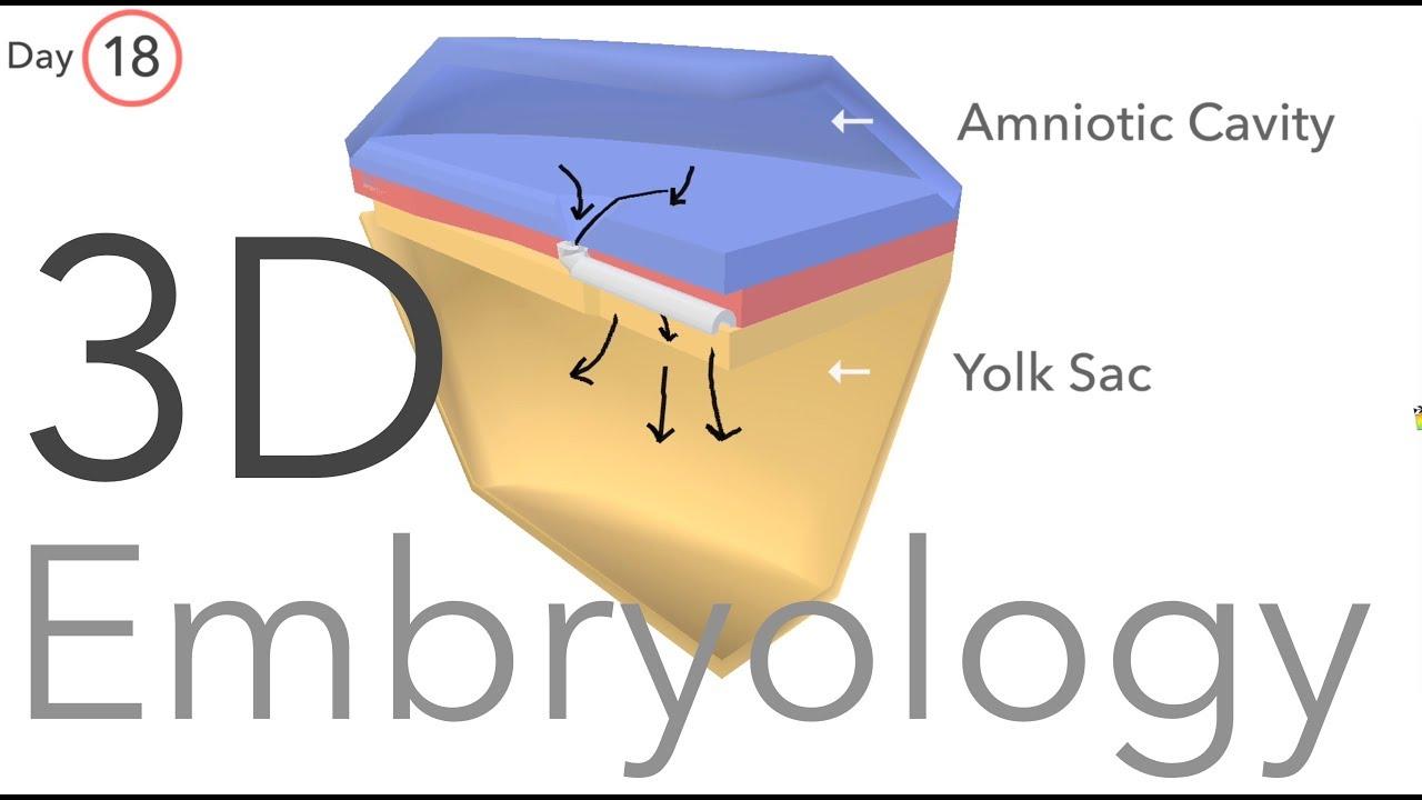 Download Gastrulation - Embryology
