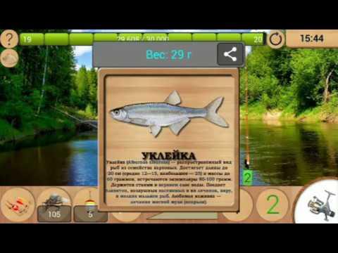 Как поймать уклейку в реальной рыбалке