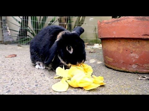 Backwards Rabbit - Parry Gripp