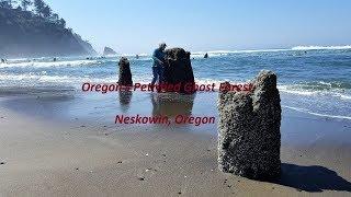 Oregon's Petrified Ghost Forest - Neskowin Oregon