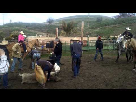 Harrison Roping and branding cattle