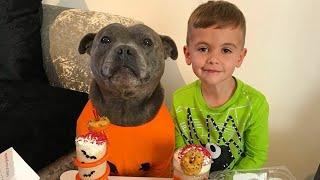 Funny Pitbull Dog Costumes♦Funny Dog Costumes ♦ Cute Dog Video