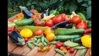 Гениальные ОВОЩНЫЕ САЛАТЫ готовлю на НОВЫЙ ГОД 3 РЕЦЕПТА из самых простых продуктов
