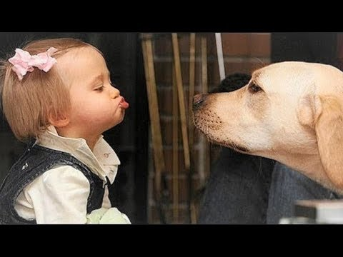 Cute Baby and Labrador dog playing together | Dog loves baby Compilation