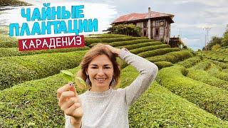 Турецкая Шри Ланка Чайные плантации Турции Отель в горах Ризе Турция 2020