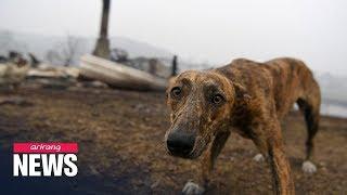 Australia's wildlife decimated by wildfires
