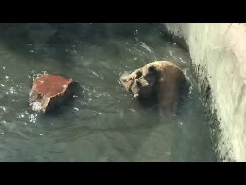 Медведи в Ереванском зоопарке 2019 октябрь