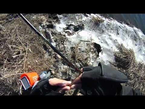 Yellow Perch fishing the bush river  ,md