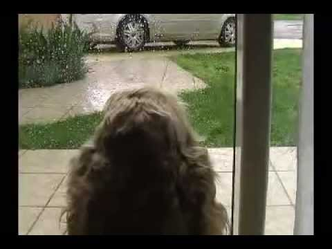 Goldenday-Homesitting La Vidéo D'une Garde D'animaux à Domicile