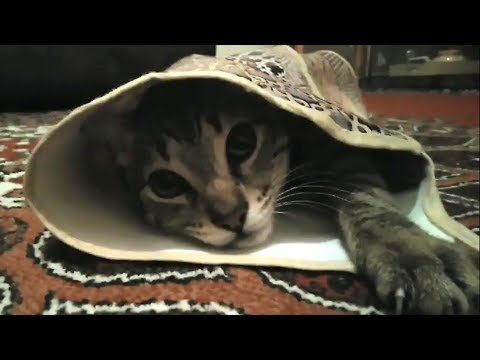 Funny and Cute Egyptian Mau Cat with Apron