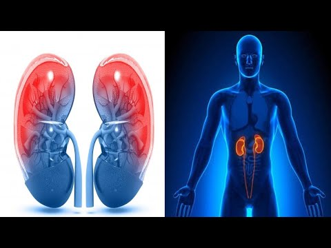 If You Want to Protect Your Kidneys Do not do This!