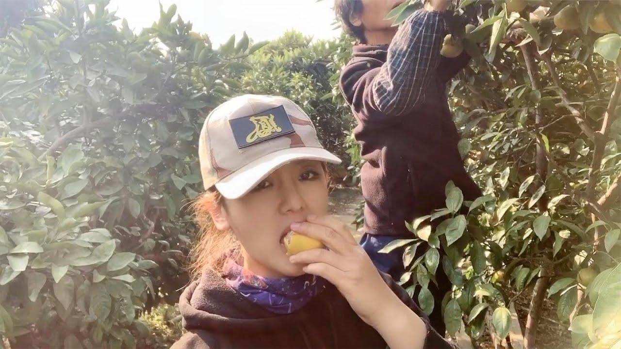 美女在苏州太湖买橘子,现摘现卖,队友都说我被宰了,这个价格算宰客吗?