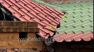Appropriate technology insulating roofing tiles made by Development Alternatives