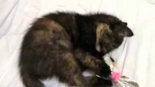 20141028 котенок