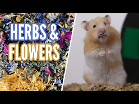 Dried Herbs & Flowers For Hamsters!
