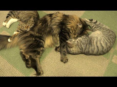 幸せそうな猫たち