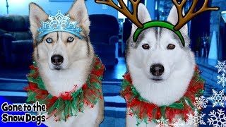 Huskies Love Holidays | Updates and Holiday Card Exchange Info