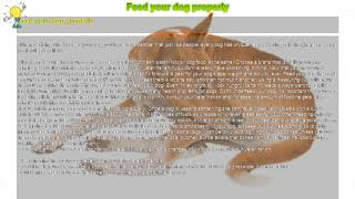 How to : Feed your dog properly