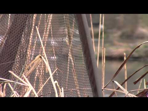 Elphicks North Lake - Carp Fishing With Carp To 40lb