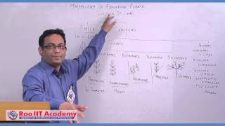 Shoot System Leaf - NEET AIPMT AIIMS Botany Video Lecture [RAO IIT ACADEMY]