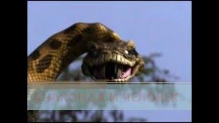 Анаконда и человек видео(Нападение анаконды на человека. Захватывающее видео. Жуткие кадры борьбы анаконды и человека. Гиганская..., 2015-10-04T10:38:43.000Z)