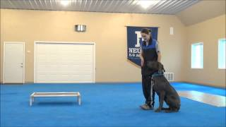 Alecs (great Dane) Boot Camp Dog Training Minneapolis