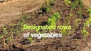 Step 2: Plan Your Garden Layout