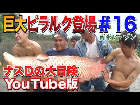 #16DYouTube /Crazy Director 's impact !Reveals a Gigantic Pirarucu'