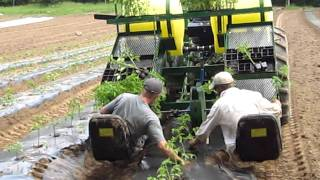 Water Wheel Transplanter in action at Langwater Farm